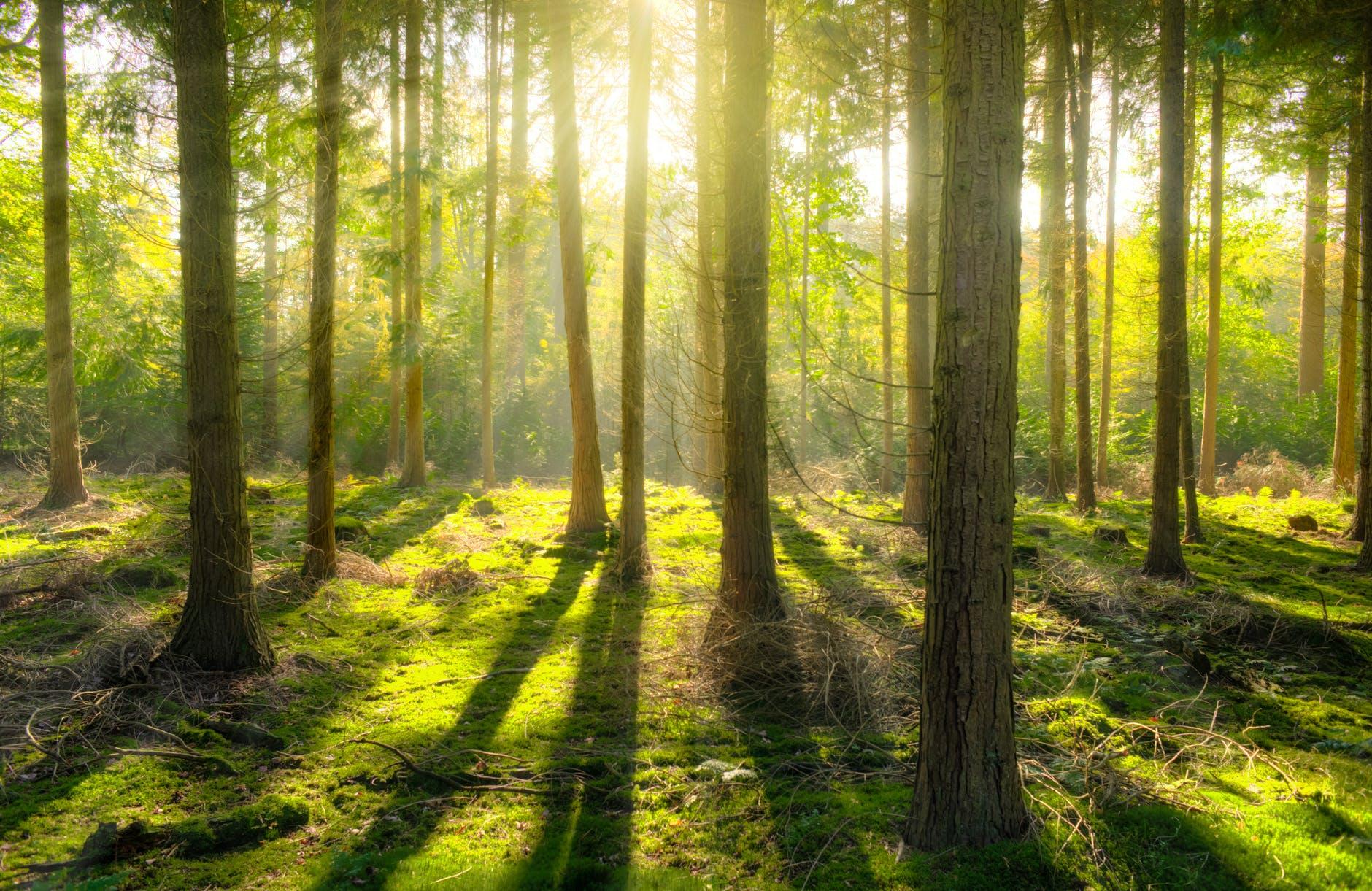 αποζημίωση ακινήτου δεσμευμένου για οικολογικούς λόγους